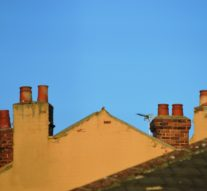 Why Is Buy To Let Still Exceeding Industry Expectations?